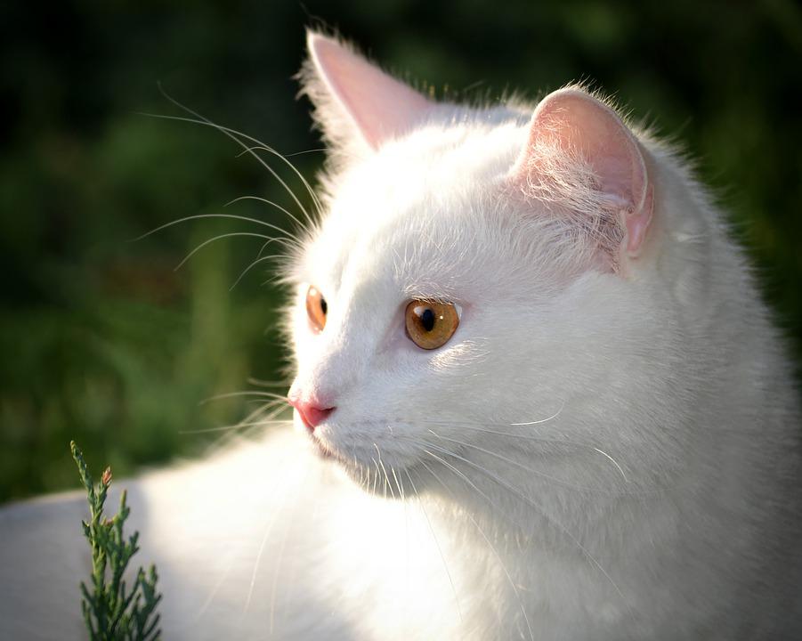 Quelles sont les démarches pour assurer un chat ?