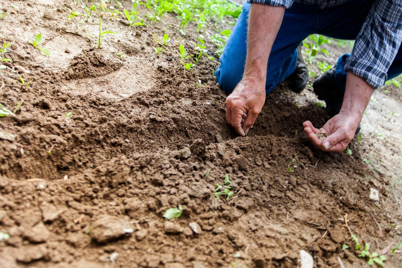 Le paysagiste est-il concerné par l'obligation de garantie décennale ?