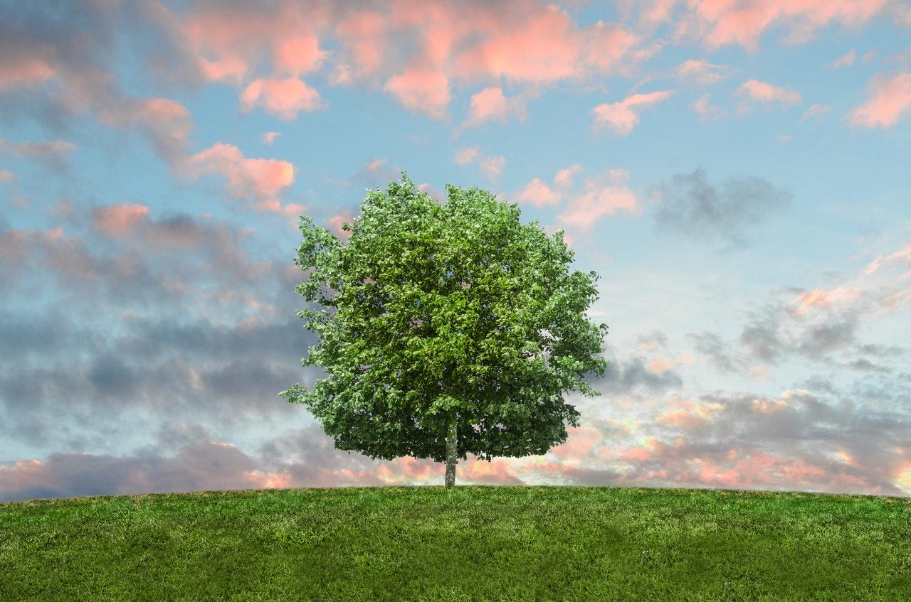 Élagage d'arbre : combien ça coûte ?